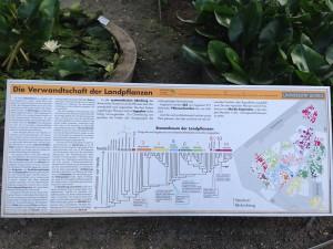 Infotafel über die Verwandtschaft der Pflanzen im Botanischen Garten