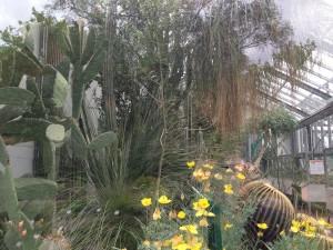 Kakteen im Gewächshaus des Botanischen Gartens