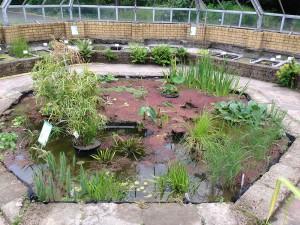 Teich mit echtem Papyrus im Botanischen Garten
