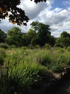 Wiesen und Bäume im Botanischen Garten